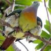 Mamá y polluelos