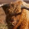 Toro Highland