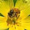 Abeja y hormiga