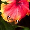 Mariposa sobre flor