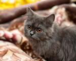 Gato de ojos rojos