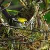 Dentro del nido