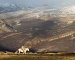 Gaucho de Patagonia